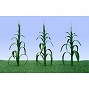 95552 CORN STALKS 30/PK. HO