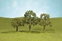 32007 WALNUT TREES