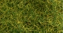 31001 6MM STATIC WILD GRASS