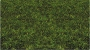 31012 MEDIUM GREEN STATIC GRASS